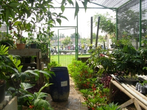 GREEN HOUSE1